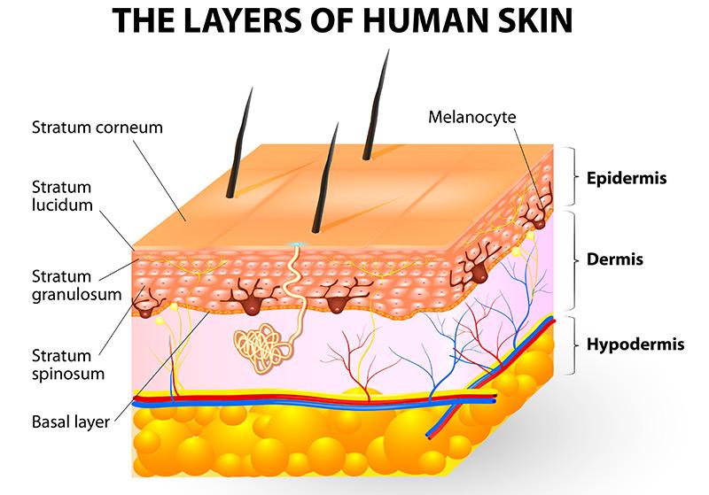 chemical peels human skin